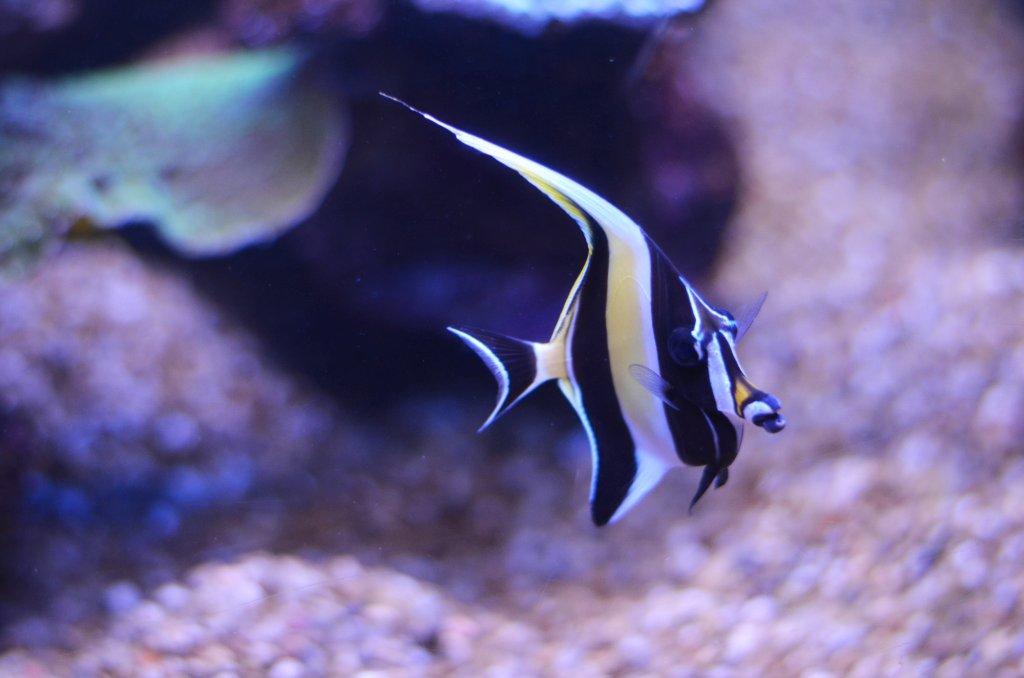 Palma Aquarium (fot. M. Armata)