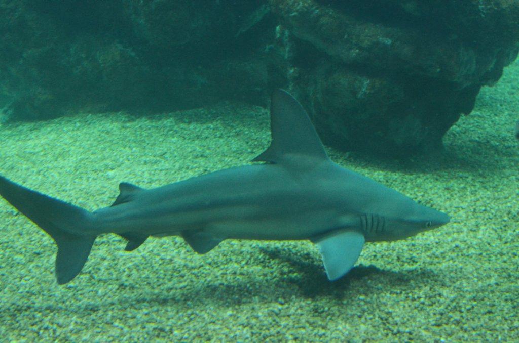 Rekin w Palma Aquarium (fot. M. Armata)
