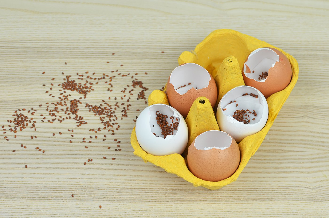 Rzeżucha w skorupce jajka