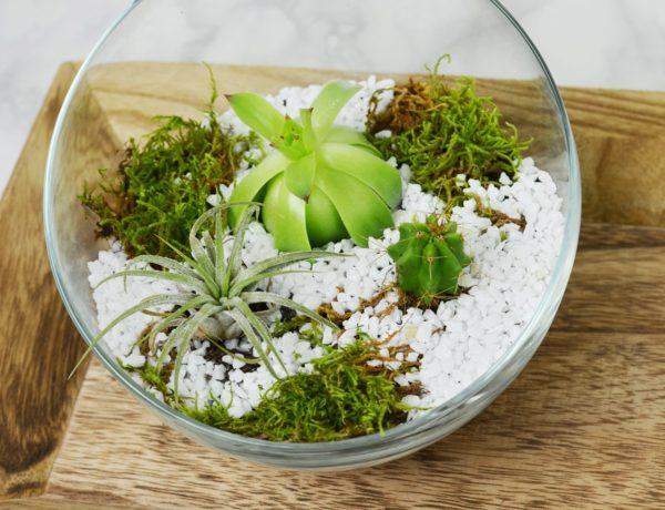 Jak zrobić terrarium na sukulenty i kaktusy?