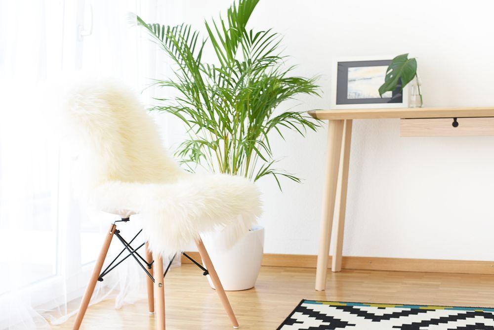 Dlaczego warto mieć rośliny doniczkowe w domu? | Polenka.pl
