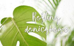 5 powodów, dla których warto mieć rośliny doniczkowe w domu