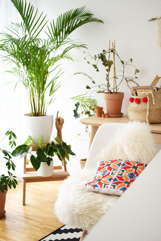 Urban jungle - rośliny w moich wnętrzach