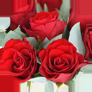 Znaczenie kolorów kwiatów - czerwony