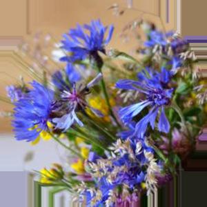 Znaczenie kolorów kwiatów - niebieski