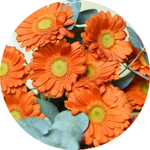 Znaczenie kolorów kwiatów - pomarańczowy