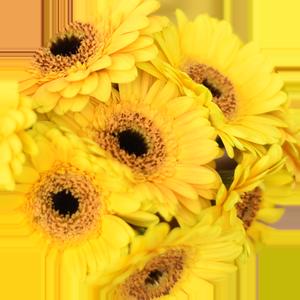 Znaczenie kolorów kwiatów - żółty